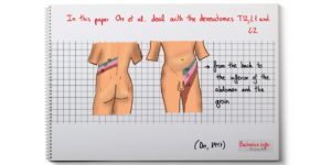 From the back to the inferior of the abdomen and the groin