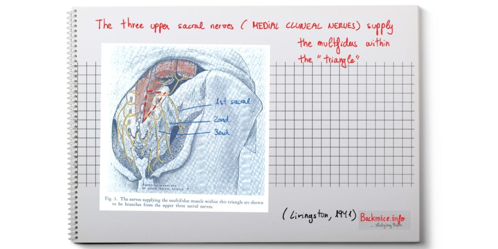 strain of the multifidus muscle
